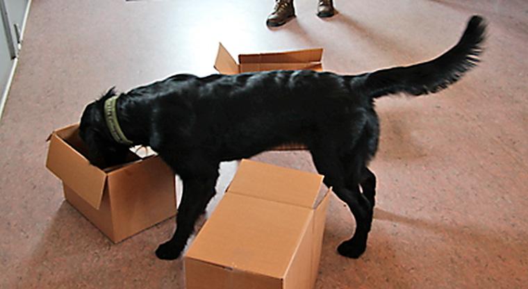 Abbey i kassen